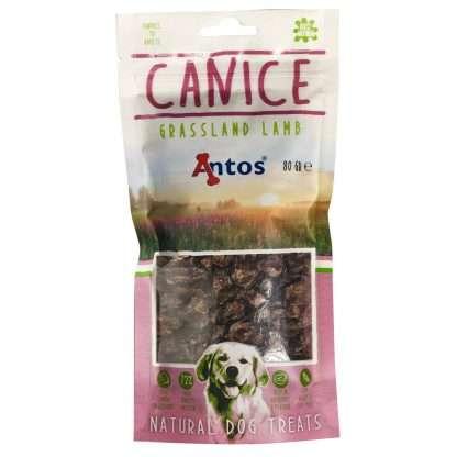 Antos-Canice-Lamb
