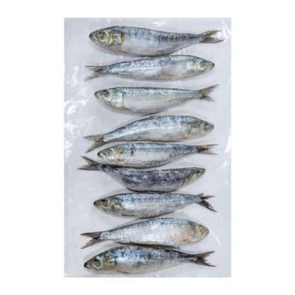 raw-frozen-sardines