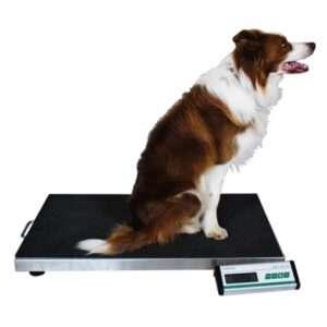 raw-dog-food-weight-check